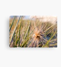 Beach Plant Canvas Print