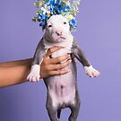 Flower Power puppy by Sophie Gamand