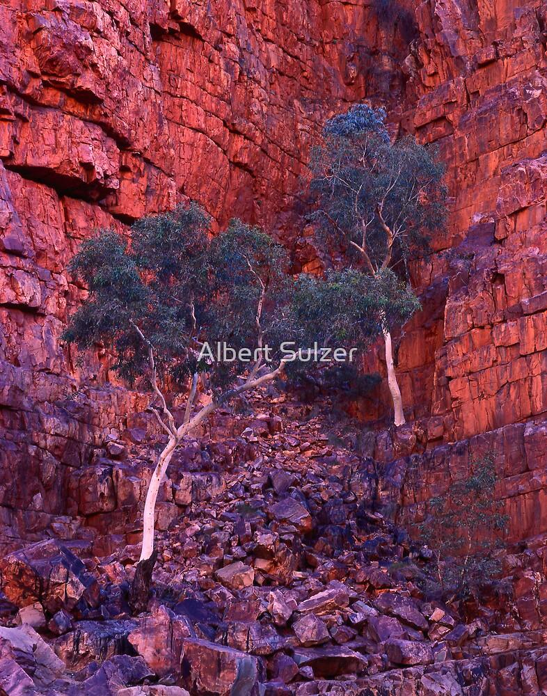 Ghost Gums -Ormiston Gorge by Albert Sulzer
