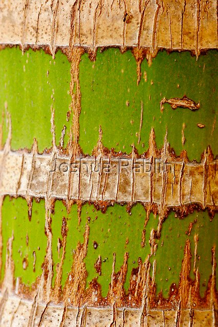 Bamboo by Joshua Rablin