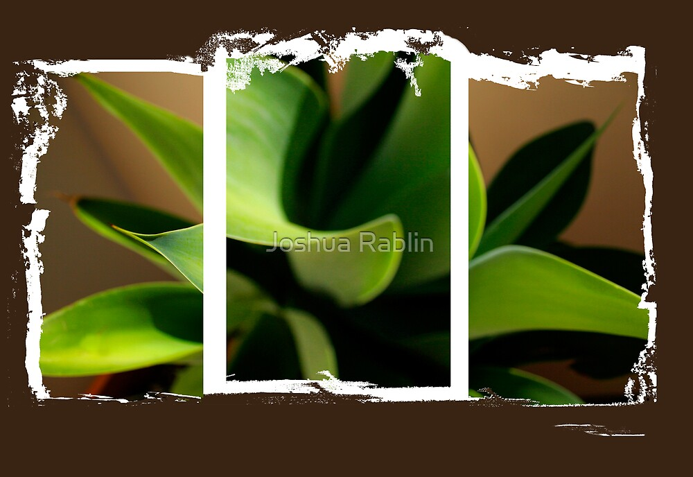 Tri Plant by Joshua Rablin