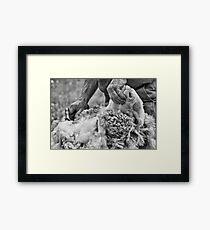 Click Go The Shears #2 Framed Print