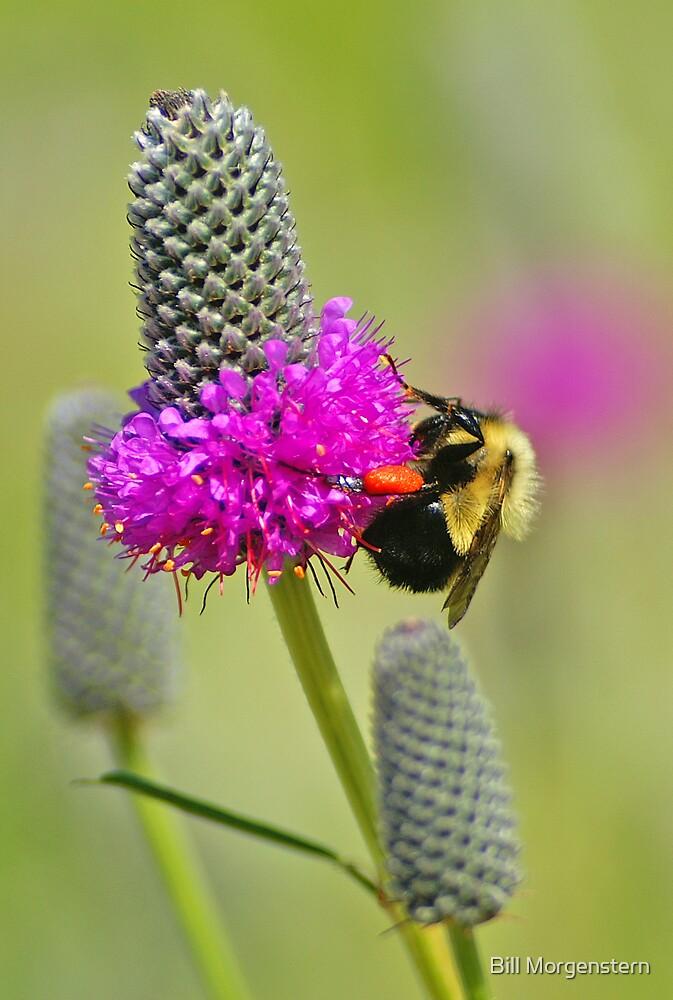 Pollinator by Bill Morgenstern
