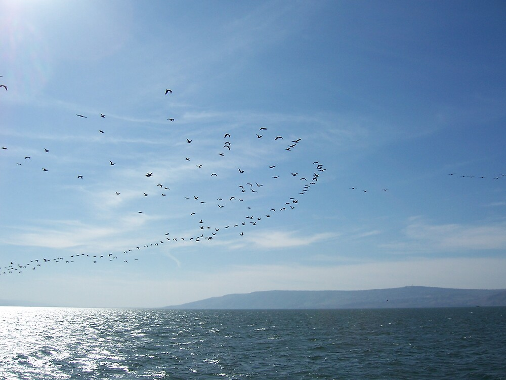 Geese over Galilee by Christopher Warren