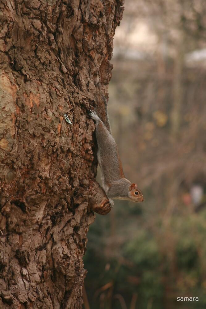 squirrel 1 by samara