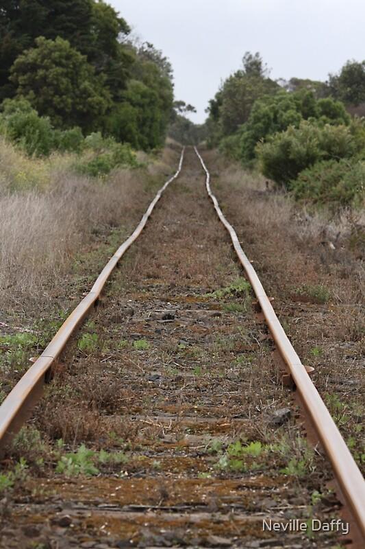 Bellarine Rail Trail by Neville Daffy
