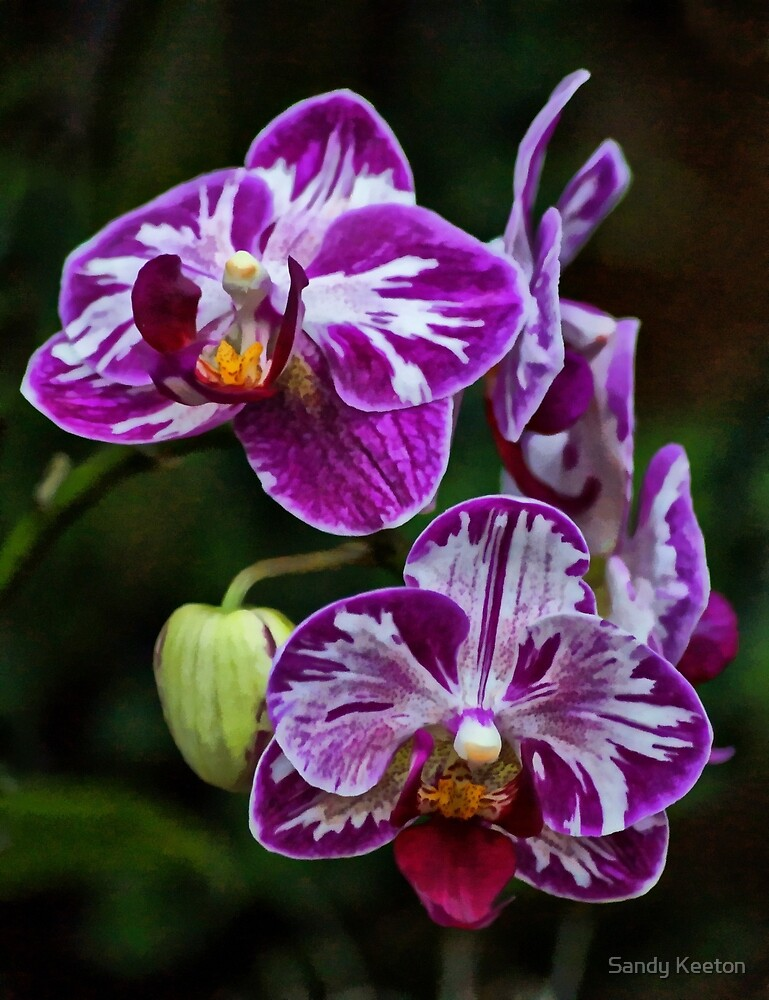 Purple Orchids by Sandy Keeton