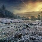 Frosty Meadow by Dave Godden