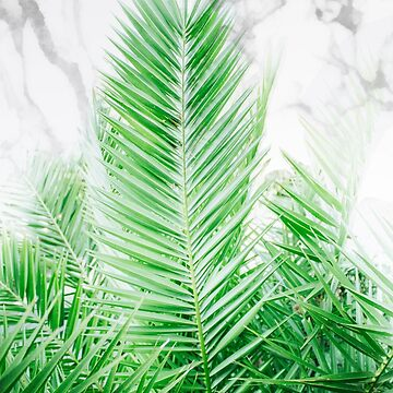 Palm Leaves on Marble Background by banginT