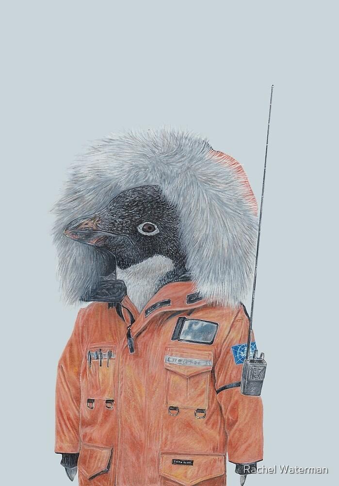 Antarctic Penguin by Rachel Waterman