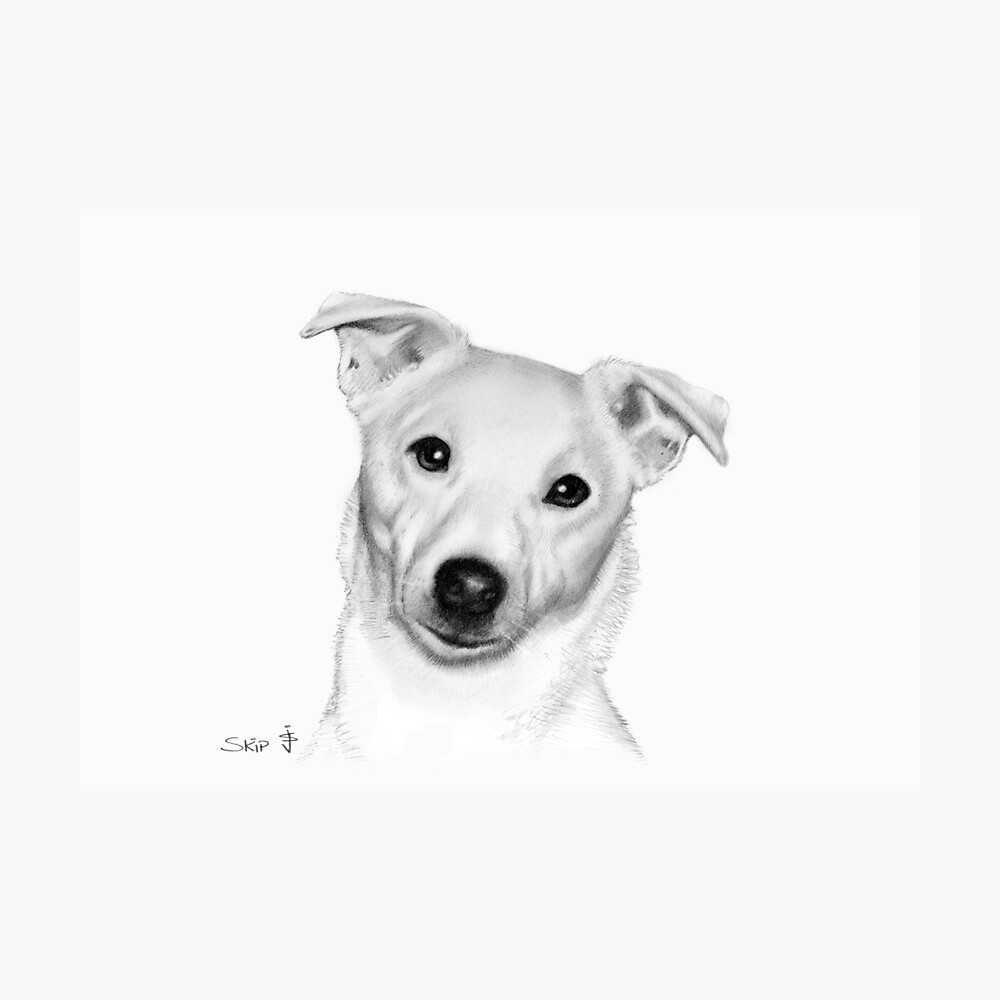 Dog pencil sketch skip photographic print