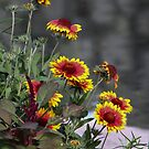 Daisy Gloriosa by the Pond  by Heather Friedman