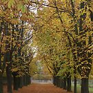 Autumn Pathway by Duncan Payne