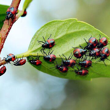 beetles 1 by jessrobbo