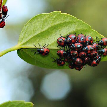 beetles 2 by jessrobbo