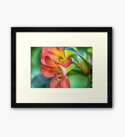 The World Is Beautiful Here... Framed Print
