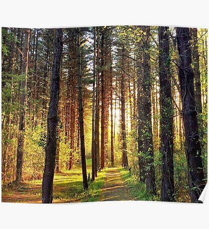Blackbird Forest Sunrise Poster