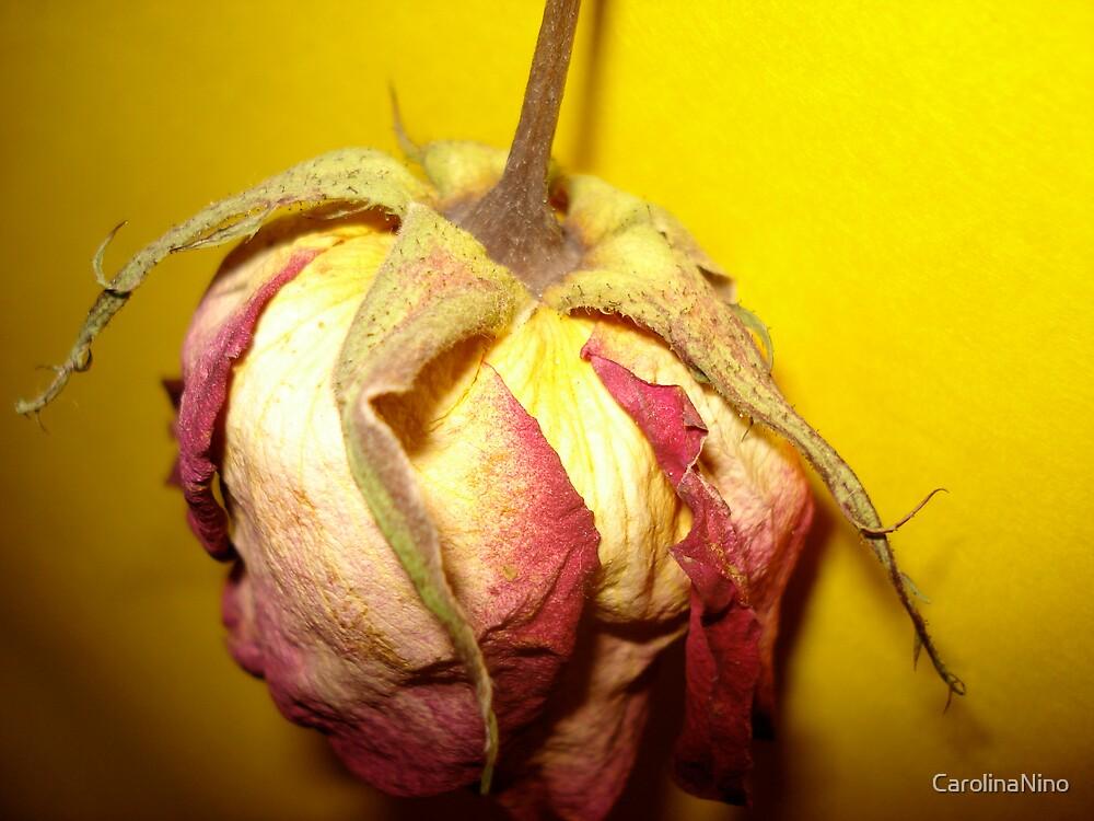 Death of a Rose by CarolinaNino