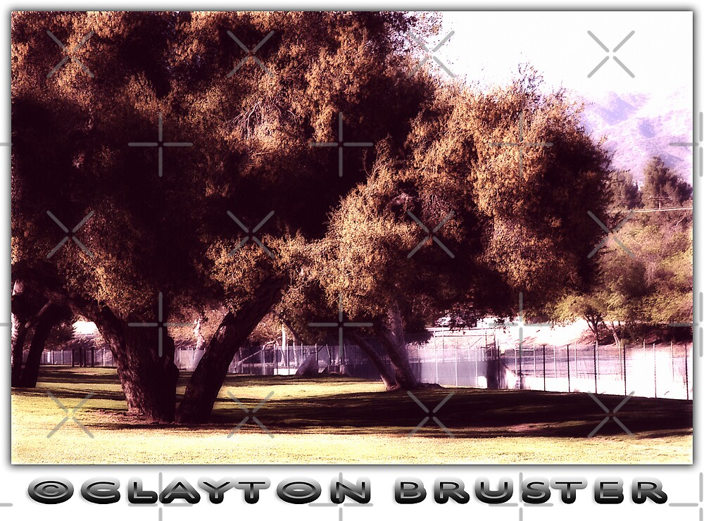 Trees by Clayton Bruster
