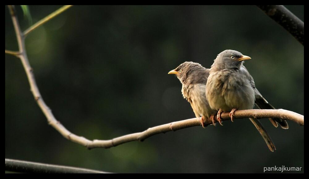 Jungle Babblers 6 by pankajkumar