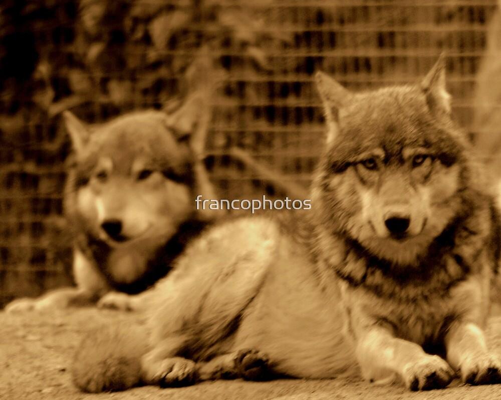 Big Bad Wolves by Franco De Luca Calce
