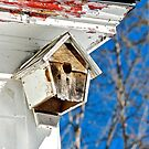 Time to fix the birdhouse by Carolyn Clark