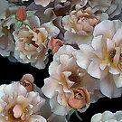 Julia's Rose by wetherellart