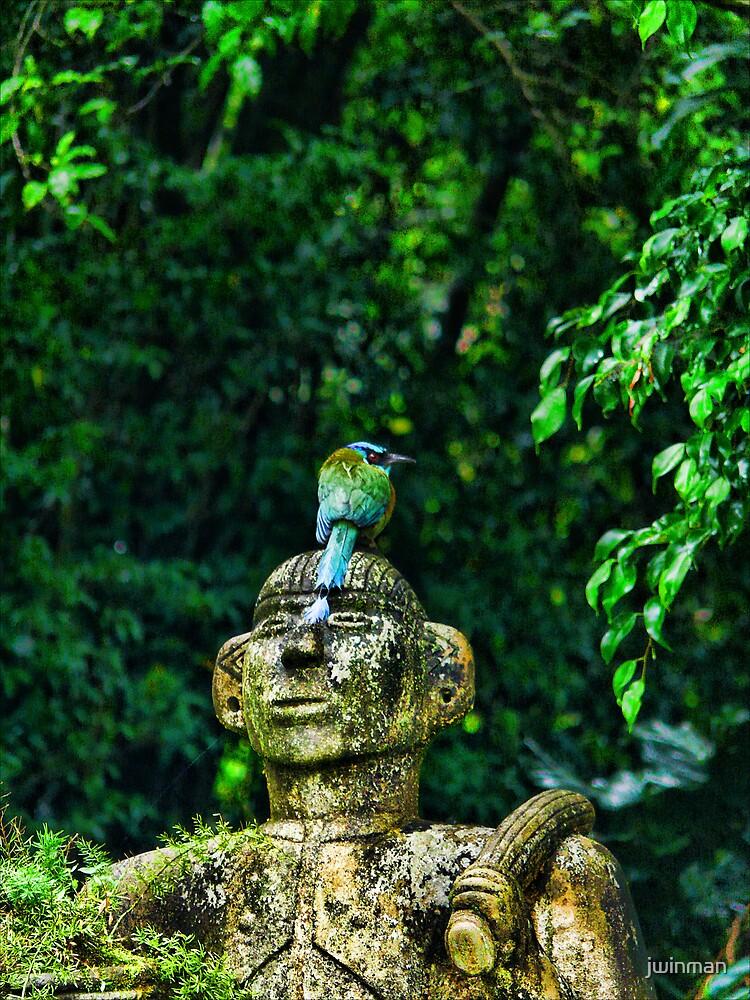Blue Crowned Motmot by jwinman
