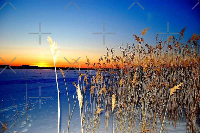Blue winter with orange horizon by loiteke