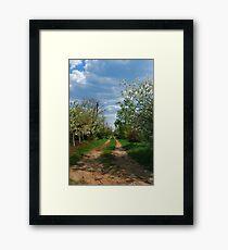 Rural road in spring Framed Print
