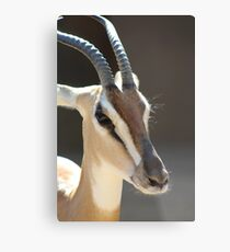 Gazelle from the San Diego Zoo Metal Print