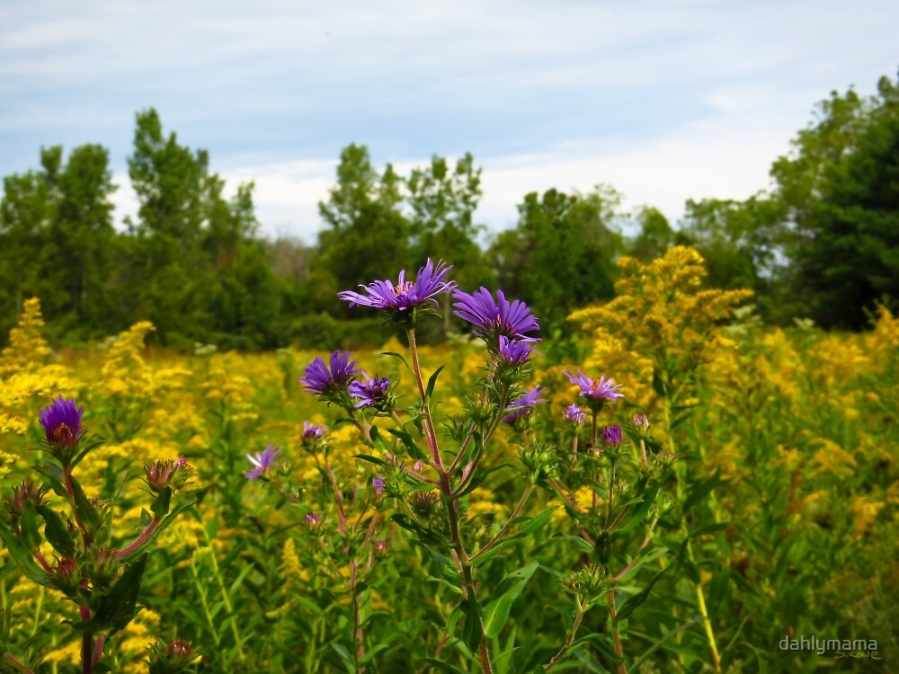 Asters And Goldenrod by Shawna Rowe