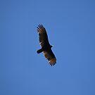 Fly Away by Valeria Lee