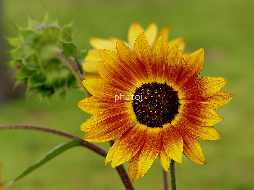photoj Flora, 'Wild Thing' by photoj