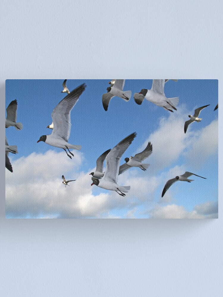 Alternate view of Laughing Gulls Canvas Print