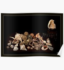 Shell Sprig Point Poster