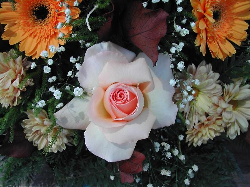 La rosa. by cieloverde