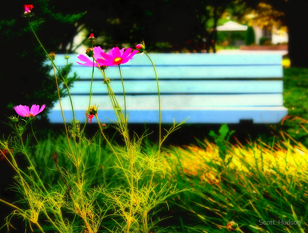 Flower and Bench by Scott  Hudson