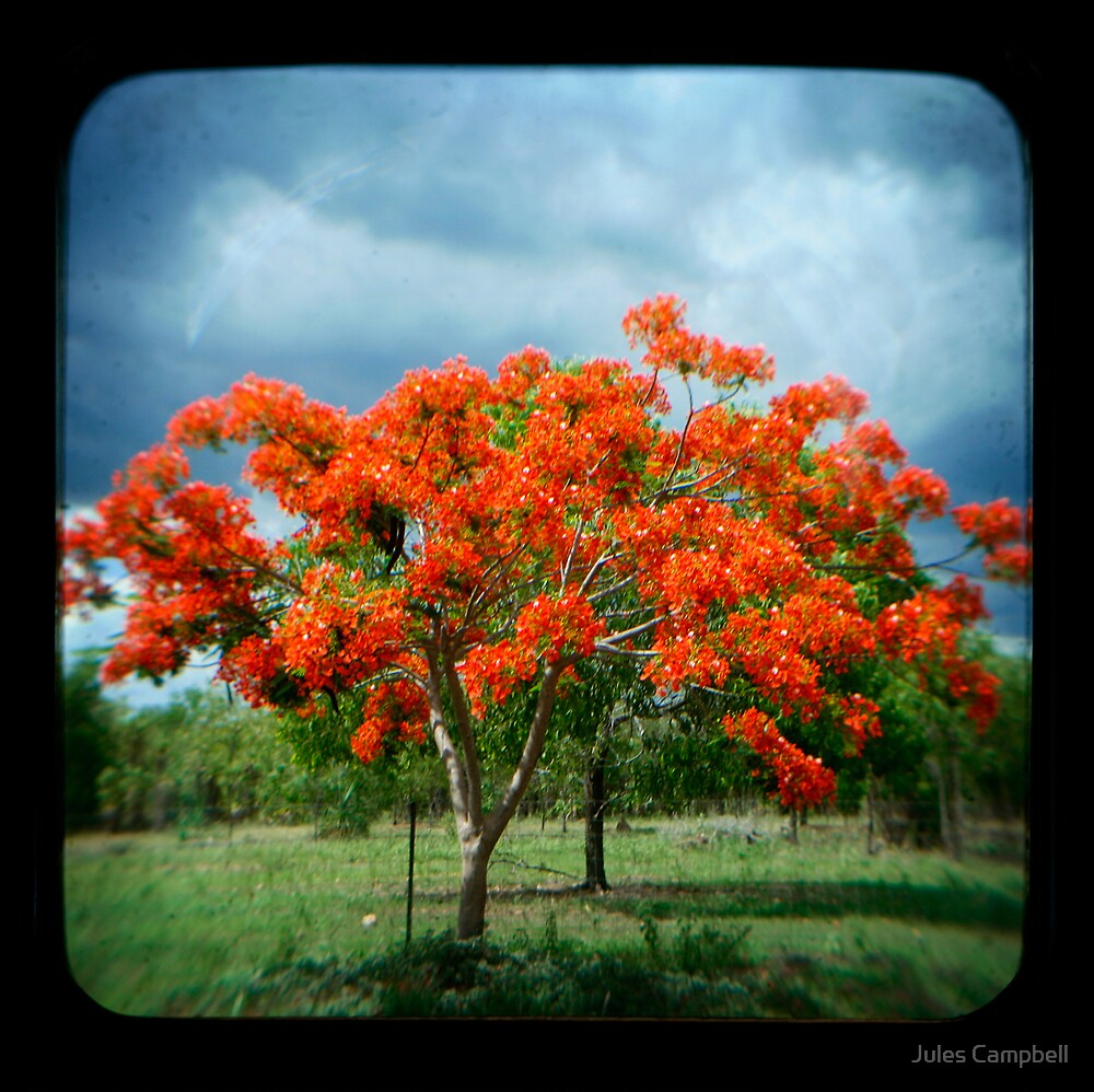Flame Tree by Jules Campbell