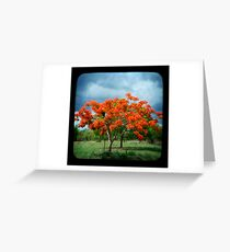 Flame Tree Greeting Card