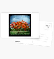 Flame Tree Postcards