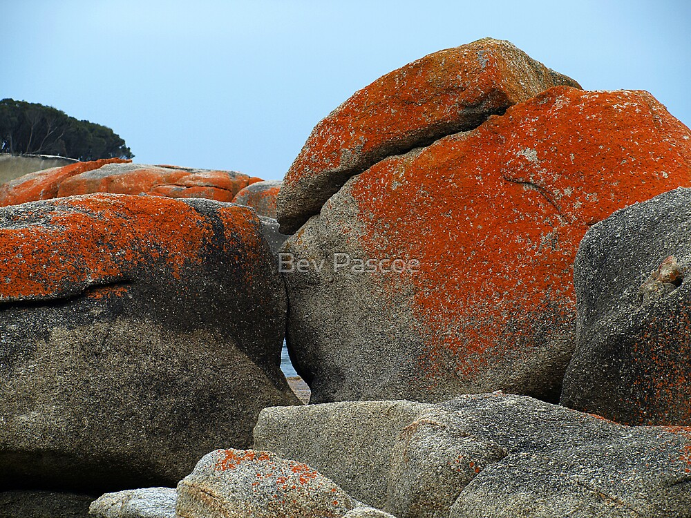 Bicheno rocks with orange lichen by Bev Pascoe