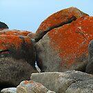 Bicheno rocks with orange lichen by Bev Pascoe