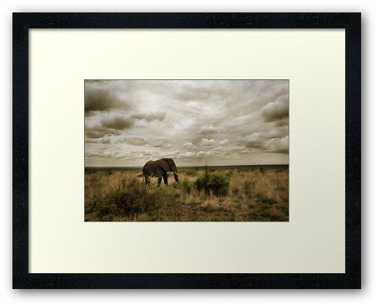 Lone Bull by Philip James Filia