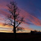 Catalpa Silhouette by Pamela Hubbard