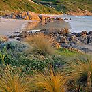 West Beach Evening by Harry Oldmeadow