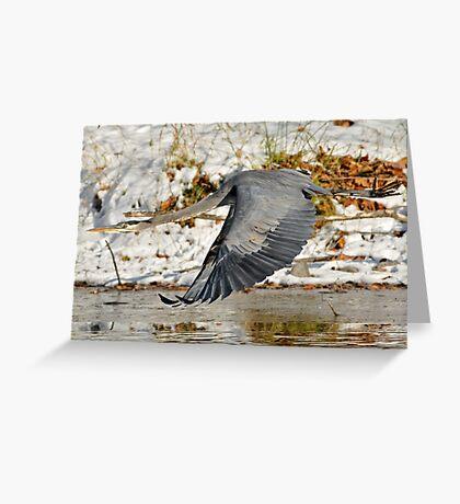 Big for a Snow Bird Greeting Card