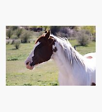 Horse Fun Photographic Print