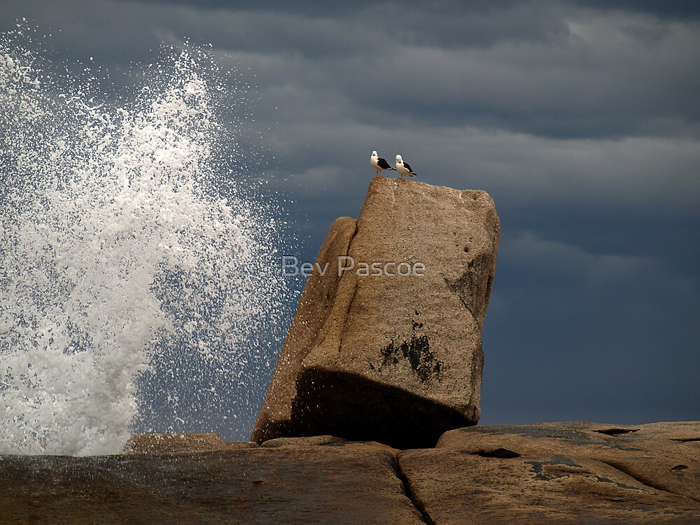 Two Seagulls on top of Bicheno Blowhole, Tasmania by Bev Pascoe