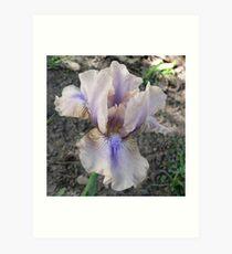 """Median Iris - """"Shameless"""" Art Print"""